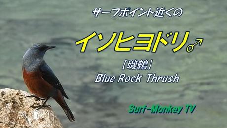 0219鳥.jpg
