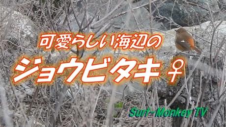 0221ジョウビ♀.jpg