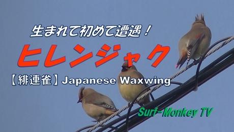 0324緋連雀.jpg