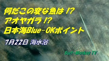 0722変な魚.jpg