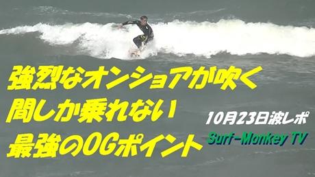 1023菊.jpg