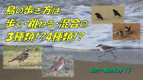 鳥の歩き方.jpg